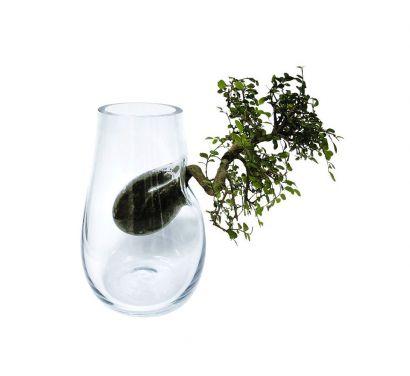 Tree Vaso