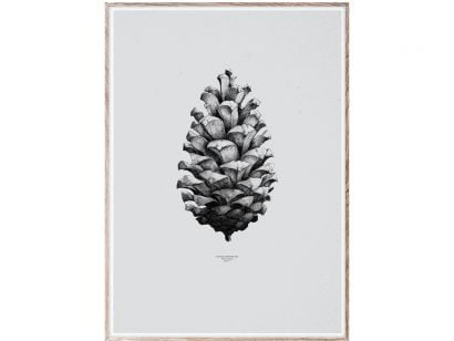 1:1 Pine Cone (Grey) Print