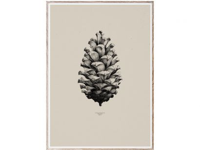 1:1 Pine Cone (Sand) Print