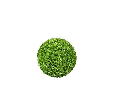 Sphere Molucella - Floreal Composition